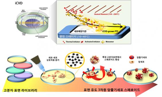 항암제 내성 막는 '암 줄기세포' 연구 가능해진다