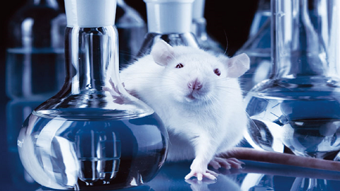 美 NIH 과학자들