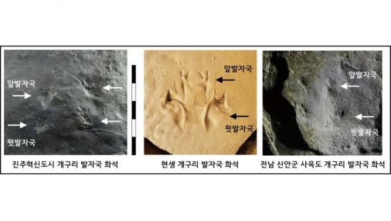 진주에서 세계에서 가장 오래된 개구리 발자국 화석 발견