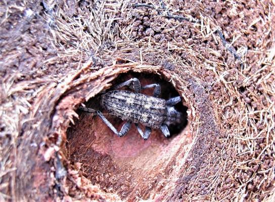 [이강운의 곤충記]자연을 거스르지 않는 곤충은 하등한 생물일까?