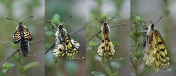 [이강운의 곤충記] 곤충 날개의 등장은 필승 전략이었다