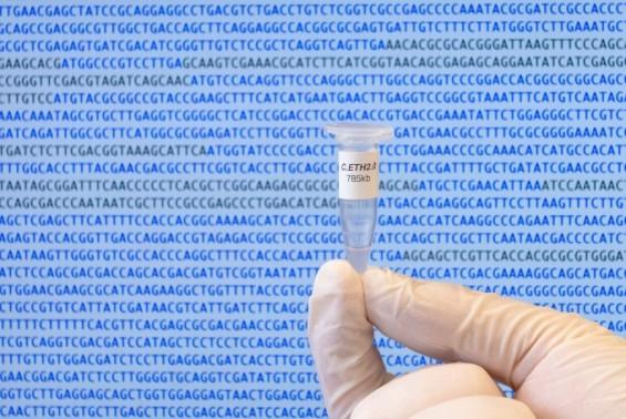 지금까지 이런 게놈은 없었다…컴퓨터로 디자인한 인공게놈 첫 탄생