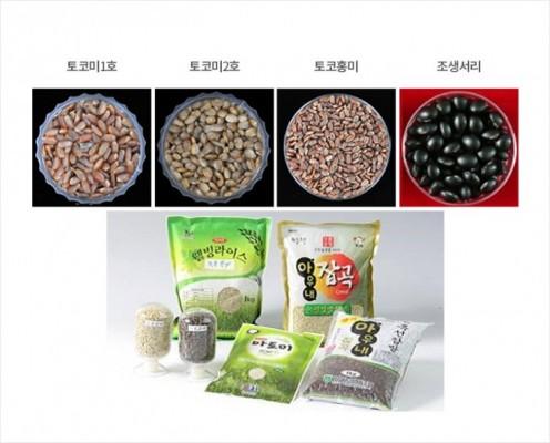 항노화 쌀, 반쪽짜리 무궁화…신품종 개발할 방사선 육종전문가 키운다