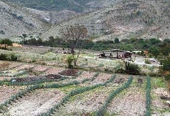 3000년 前 농사-가축사육이 지구생태계에 영향 줬다?