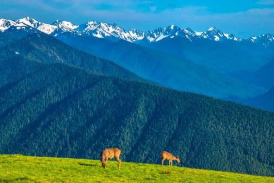 다양한 기후 품은 산악지대가 생물다양성 우수해
