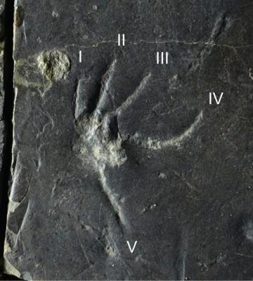 진주에서 가장 완벽한 중생대 백악기 도마뱀 발자국 화석 나왔다