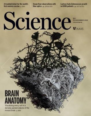 [표지로 읽는 과학] 한층 더 상세하게 재현한  뇌 신경세포들