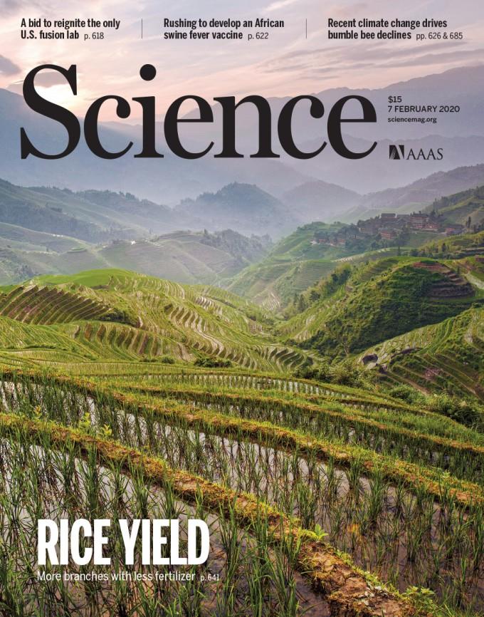 [표지로 읽는 과학]비료 덜 쓰고 벼 수확량 늘리는 방법