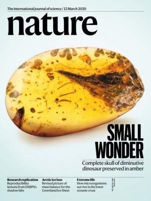 [표지로 읽는 과학]호박 속에서 발견된 세계에서 가장 작은 공룡