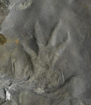 1억1000만년 전 경남 진주에는 '원시 악어'가 살았다