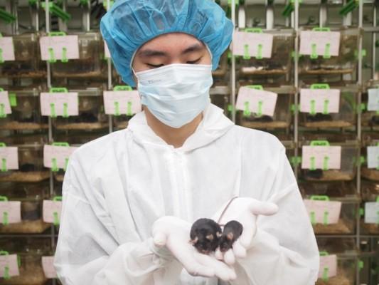 쥐도, 햄스터도, 영장류도 나섰다…코로나19 해결 나선 실험동물들