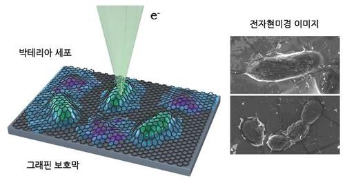 살아있는 세포 손상 없이 전자현미경으로 관찰 성공