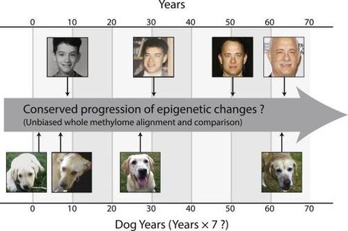 반려견 한 살=사람 서른 살? '곱하기 7'은 틀렸다