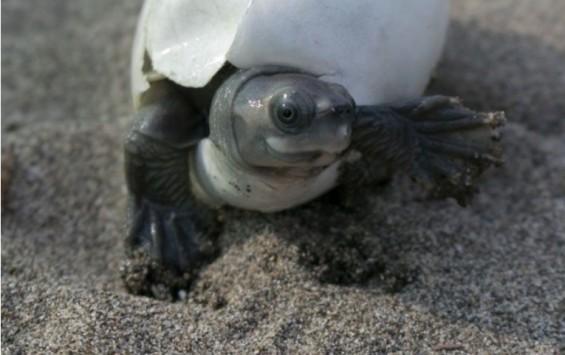 [화보+] 좀비 딱정벌레·웃는 거북…네이처가 선정한 최고 과학 사진