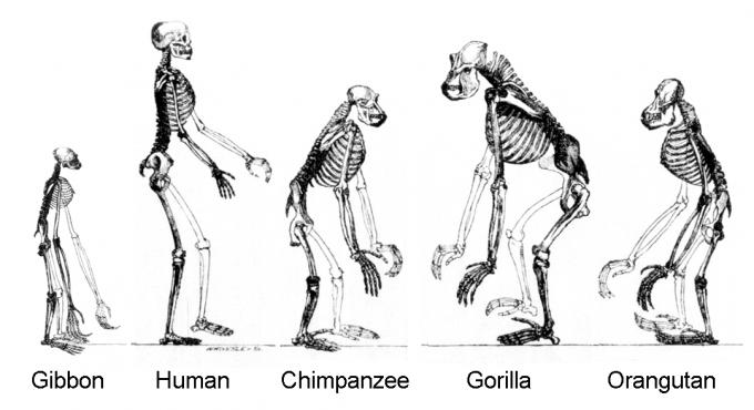 [사이언스N사피엔스]인간은 특별하지 않다