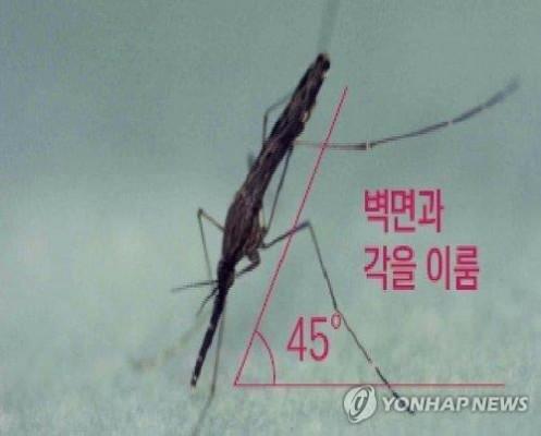 올해 국내 말라리아 환자 33% 감소…'코로나19 영향'