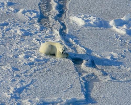 따뜻해진 북극 바다, 바다 속 소용돌이 강해진다