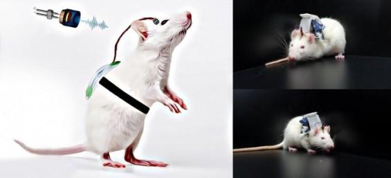 가볍게 착용해 뇌졸중 손상 뇌신경 재활하는 초음파 자극기