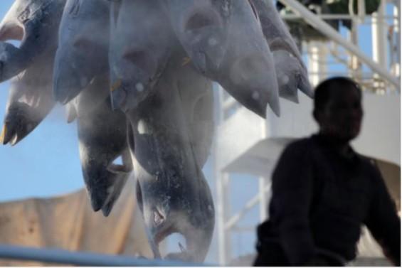 전세계 어선 4척 중 1척에 '노예선원' 탄다…중국 오징어선박, 한국 참치잡이배도 '의심대상'