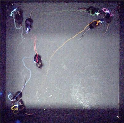 로봇을 보는 순간 실험쥐들 머리의 LED가 동시다발로 반짝였다
