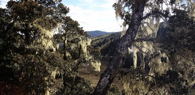 중국 윈난성 남부에 조성된 산림이다. 영국 케임브리지대 연구진은 이 지역이 기후변화로 열대 관목에서 박쥐가 서식하기 좋은 열대 사바나로 바뀌며 신종 코로나바이러스 감염증(코로나19) 대유행을 촉발했다는 연구결과를 공개했다. 케임브리지대 제공.