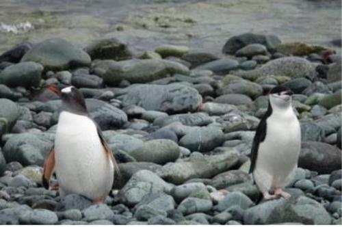 펭귄들의 슬기로운 남극 생활…영역 나눠 사냥하며 공존
