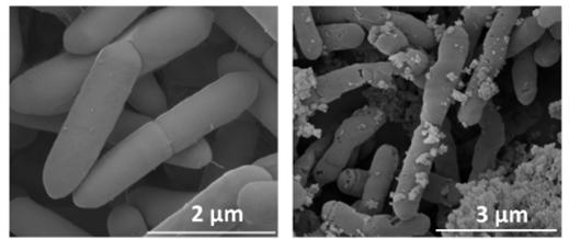 미생물에 광나노입자 붙여 이산화탄소 화학물질로 바꾼다