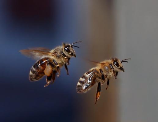 [잠깐과학] 꿀벌도 투표 한다
