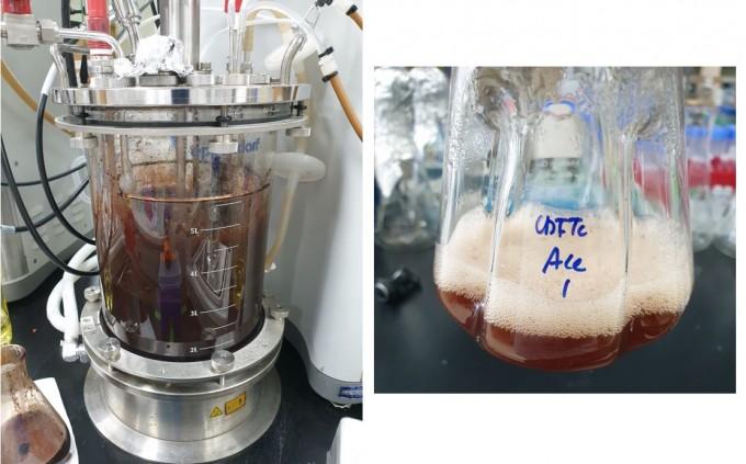 미생물에서 립스틱과 딸기우유 붉은색소 생산한다