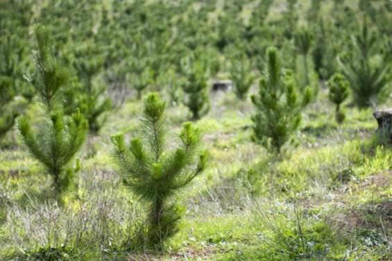 국내 산림 벌목 논란...美 연구진