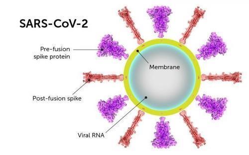 감기 바이러스 '면역 기억', 신종 코로나도 통할 수 있다