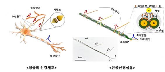 뇌 신경 세포망 모방한 인공섬유 기술 개발