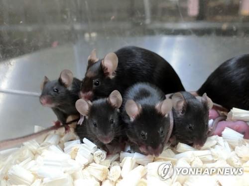 우주정거장 방사선에 장기간 노출된 쥐 정자서 정상 새끼 태어나