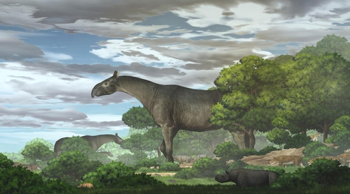 기린보다 크고 코끼리보다 무거운 고대 코뿔소 화석 발굴
