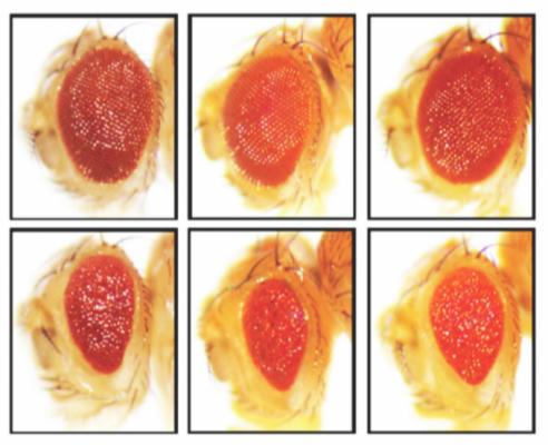 '세포는 계획이 다 있구나'…자가포식으로 치매 유발 타우 단백질 분해