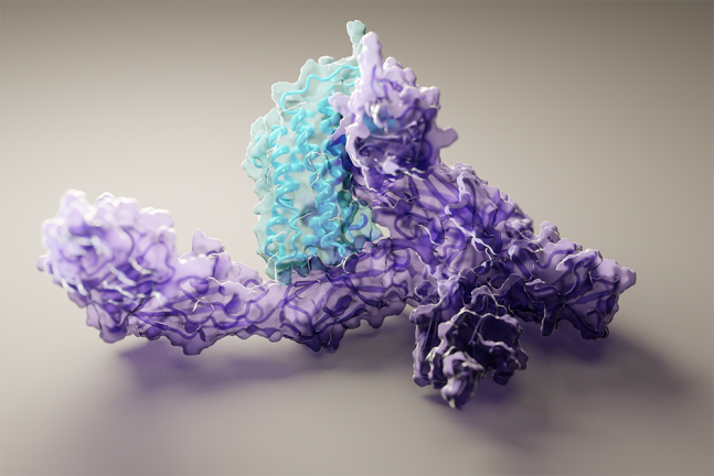 미국 워싱턴대의 AI 가 밝힌 단백질 구조. 면역 신호물질인 인터루킨-12(파란색)이 수용체(보라색)에 결합한 모습이다. 워싱턴대 단백질설계연구소 제공