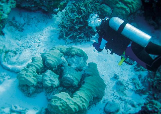 우경식 교수가 미크로네시아 추크주의 산호초와 탄산염 퇴적물을 조사하고 있다. 우경식 제공