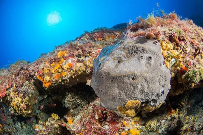 프랑스 해안에서 자라는 회색 해면. 목욕용 스펀지로 쓰이기도 한다. 네이처 제공