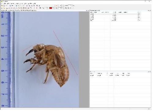 매미 허물 사진만으로 AI가 매미 종류 구분…연내 프로그램 개발
