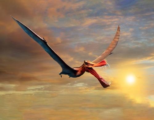 공룡시대 호주 내해 용처럼 누빈 날개폭 7m 익룡 화석 발굴