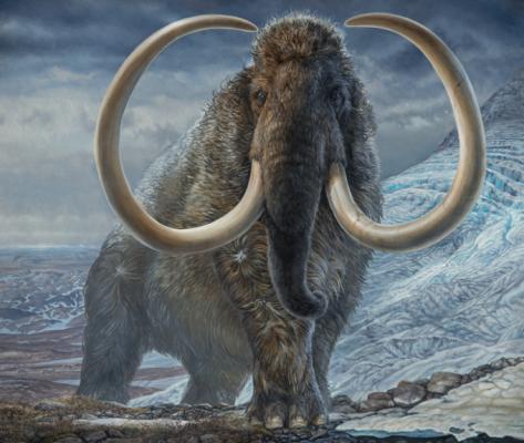 지구를 두 바퀴나 걸었네…상아로 밝혀낸 험난한 알래스카 털매머드의 삶