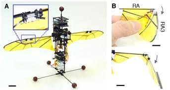 풍뎅이를 모방한 날갯짓 비행로봇 ′KU비틀′의 모습이다. 과학기술정보통신부 제공