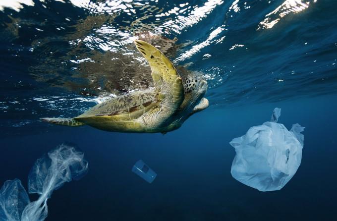 해류를 타고 바다를 떠다니며 자라나는 어린 거북이 인간이 버린 플라스틱에 노출돼있는 것으로 나타났다. 게티이미지뱅크 제공