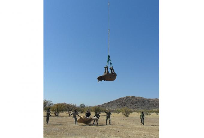 미국 코넬대 연구팀이 이그노벨상 올해의 운송상을 받았다. 나미비아 환경산림관광부 제공