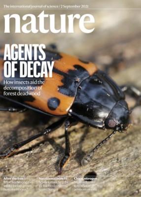 [표지로 읽는 과학] 딱정벌레는 어떻게 죽은 나무 분해에 도움을 줄까