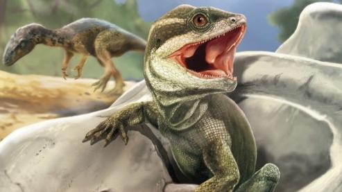 [표지로 읽는 과학]고대 도마뱀 화석에서 뱀과 도마뱀의 기원 찾았다