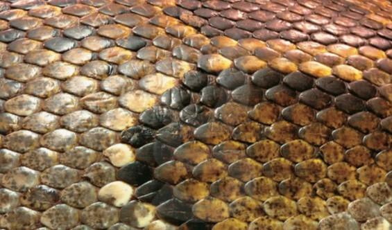 뱀 비늘 본딴 유연한 배터리 나왔다