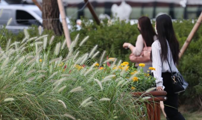 이른 아침 서울 기온이 24.4도로 조금 선선해진 12일 시민들이 가을 화초로 가꿔진 서울 청계광장에서 출근하고 있다. 연합뉴스 제공