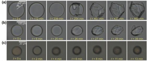 [과기원은 지금]KAIST, 소금을 이용해 자가조립 나노캡슐 개발 外
