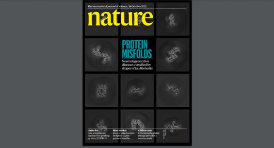 [표지로 읽는 과학]단백질 접힘과 질환의 연결고리